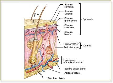 anatomy and physiology case studies with answers