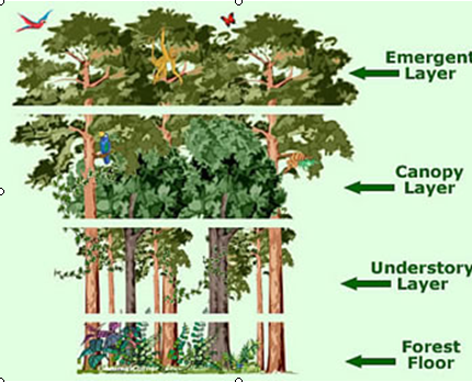 Abiotic and Biotic Factors - Laotian Rainforest