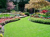 lawn care in atlanta
