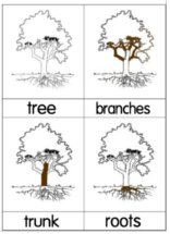 Parts of a Tree Nomenclature Cards