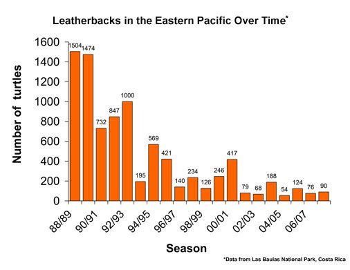 Endangered species leatherback sea turtle this is a graph showing the decline population of the leatherback sea turtle from 1988 2007 altavistaventures Gallery