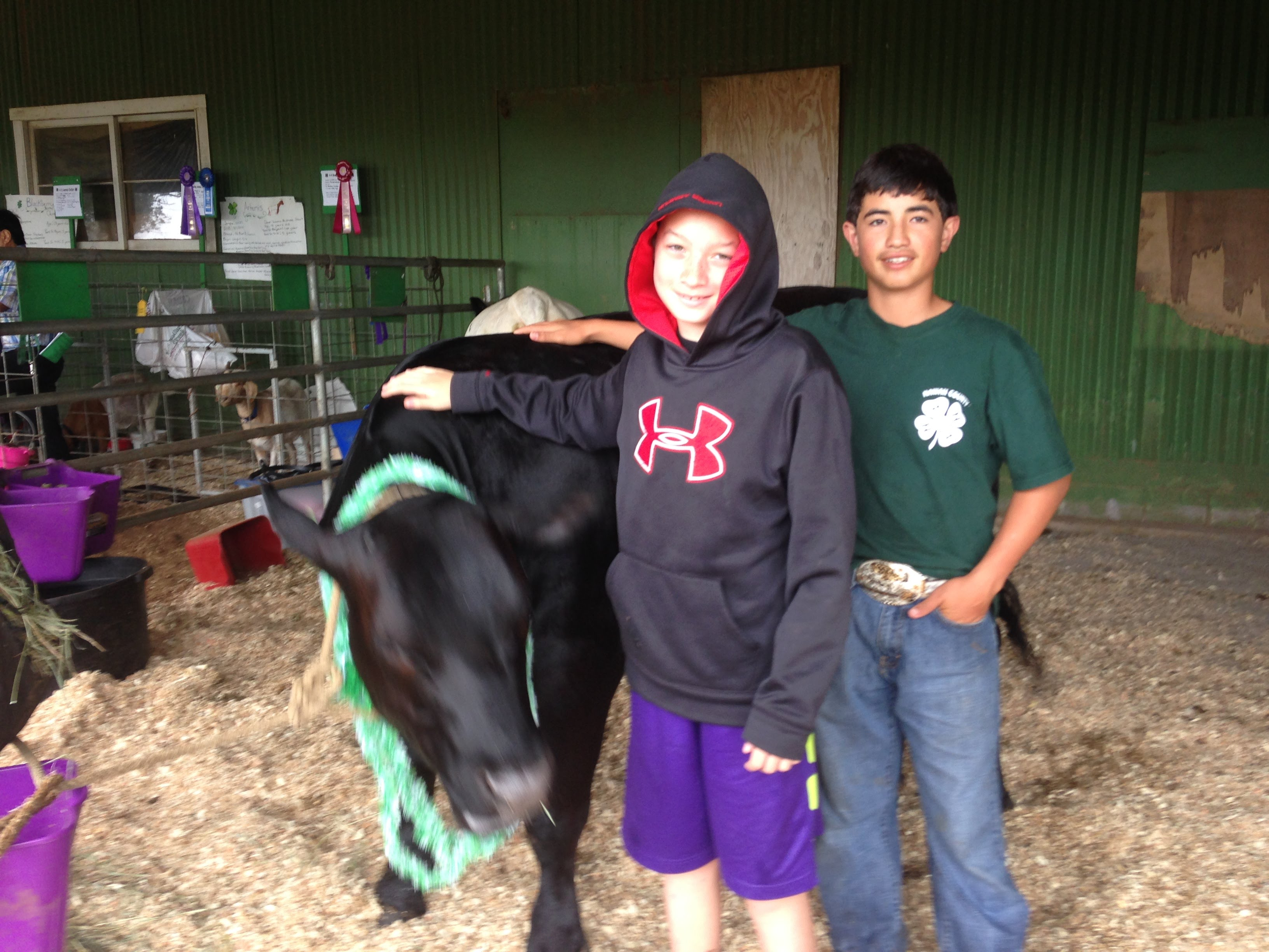 My first 4 h steer oops levi higa 4 h this is adian his mom carolyn bid on my steer at the 4 h auction mahalo thecheapjerseys Images