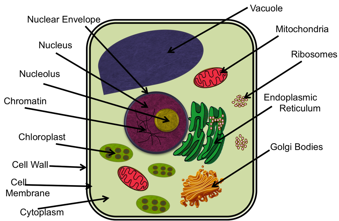 A Plant Cell - Life on Cells