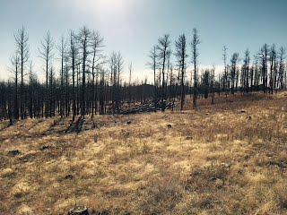 Rogers Research Station Fire effect on Forest regeneration