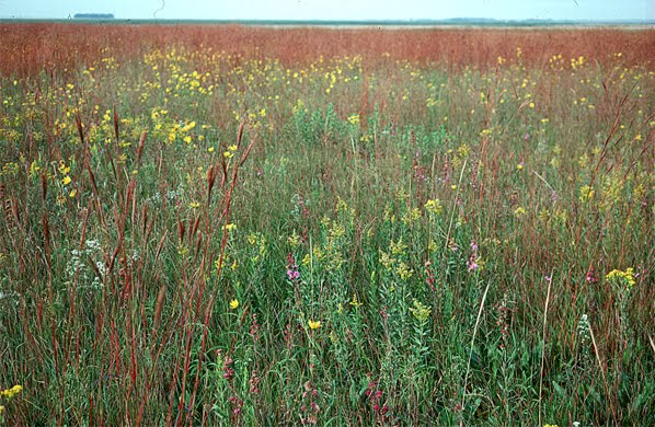 The Living Prairie Museum Is A 12 Hectare (30acre) Tall Grass Prairie  Preserve Located Inside The City Of Winnipeg. Set Aside In 1968, This  Preserve Is Home ...