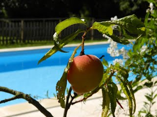 Peaches by the pool