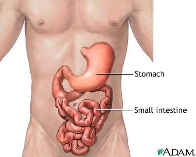 Stomach2 besides 3433248 additionally The Function Of The Large Intestine In The Human Digestive System together with Shoulder Joint Anatomy Cadaver together with Major Organs Of The Central Nervous System. on abdominal cavity