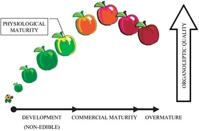 Differentiate between physiological maturity and horticultural maturity