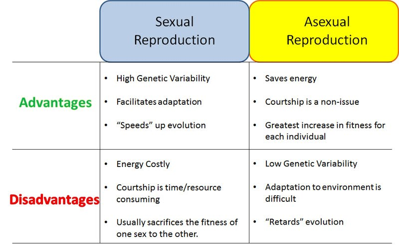 Low libido or asexual and sexual reproduction