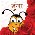 Bhunga- the social insect!