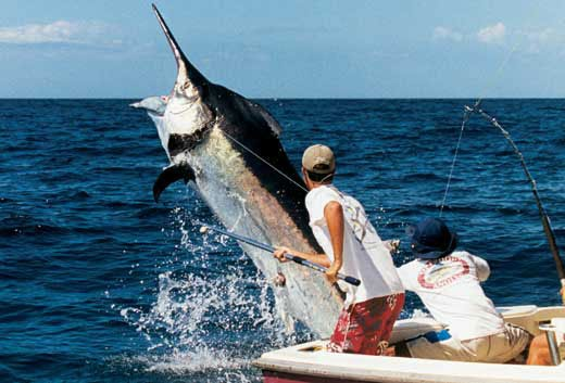Fishing licenses baja california wiki for California fishing regulations