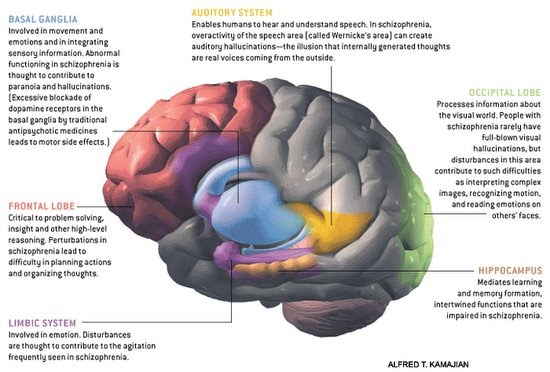 Research papers on memory function