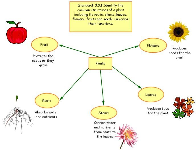 Flower Concept Map.Class Materials
