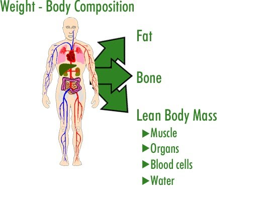 explain the relationship between body composition fat and health