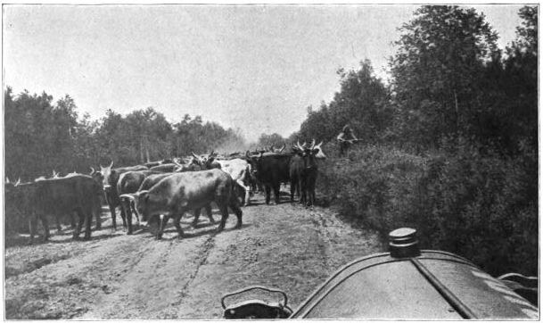 A typical encounter on Siberian roads