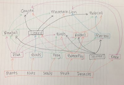Food Web Page Mountains And Lions