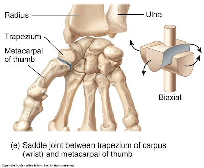 Types Of Synovial Joints Movement About A Synovial Joint