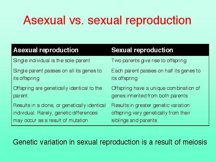 Compare and contrast sexual and.asexual reproduction photo 48