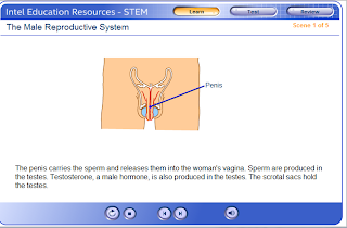 Reproducation an growth mr rowe science the male reproductive system ccuart Gallery
