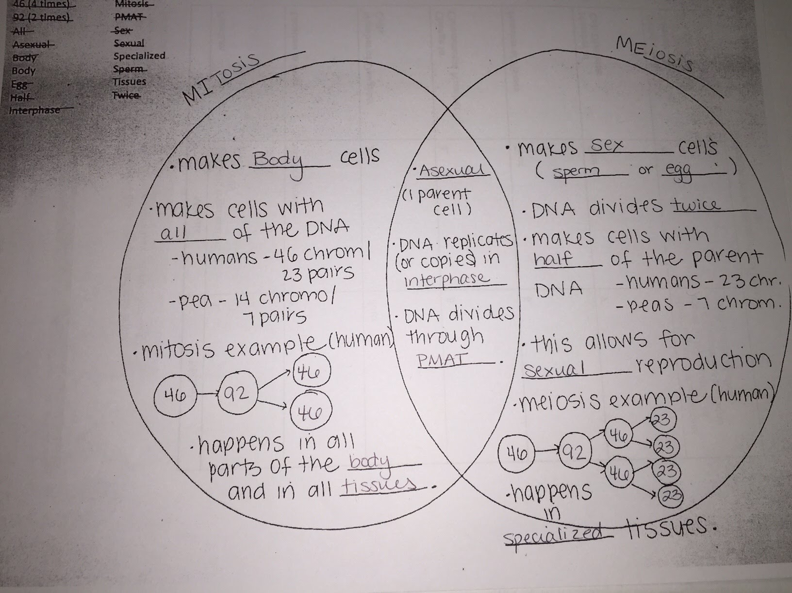 Venn diagram division free download wiring diagram unit 7 dna replication and cell division mrs mcnamaras downloadable venn diagram template this unit pooptronica Choice Image