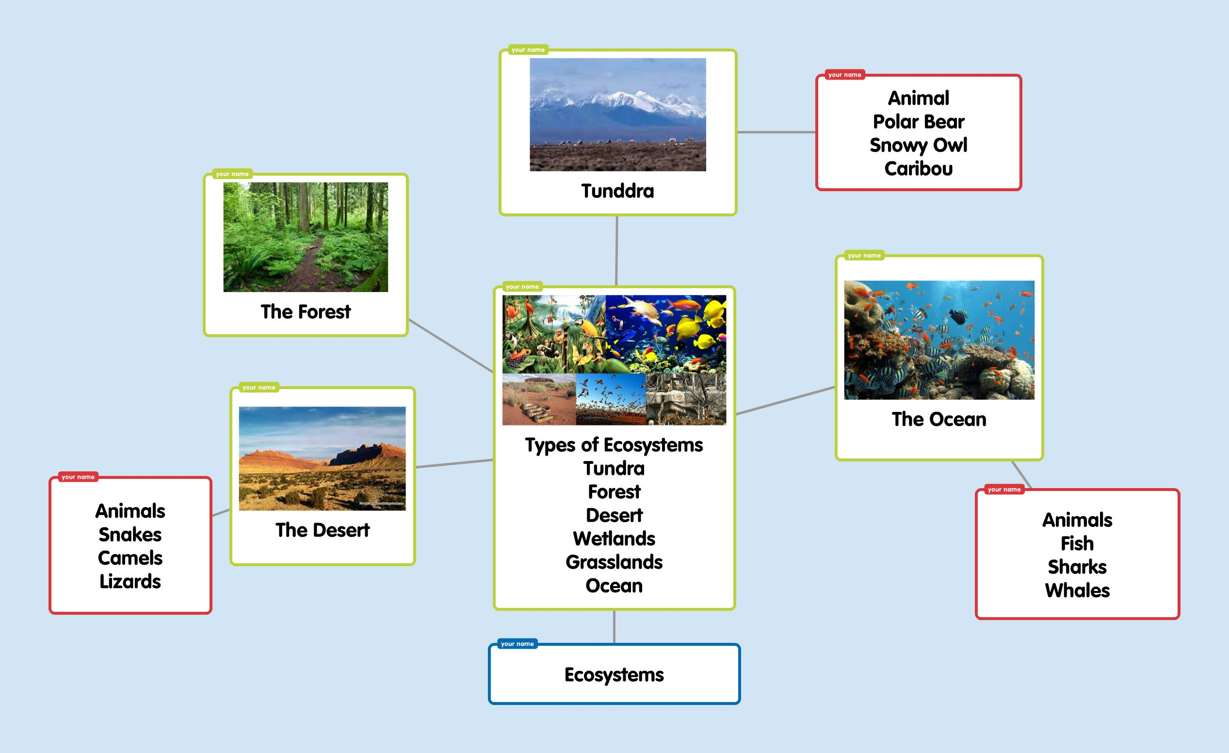 Ecosystem Concept Map Mrs Torres S 3rd Grade Ecosystem