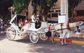 Nahariya carriage rides