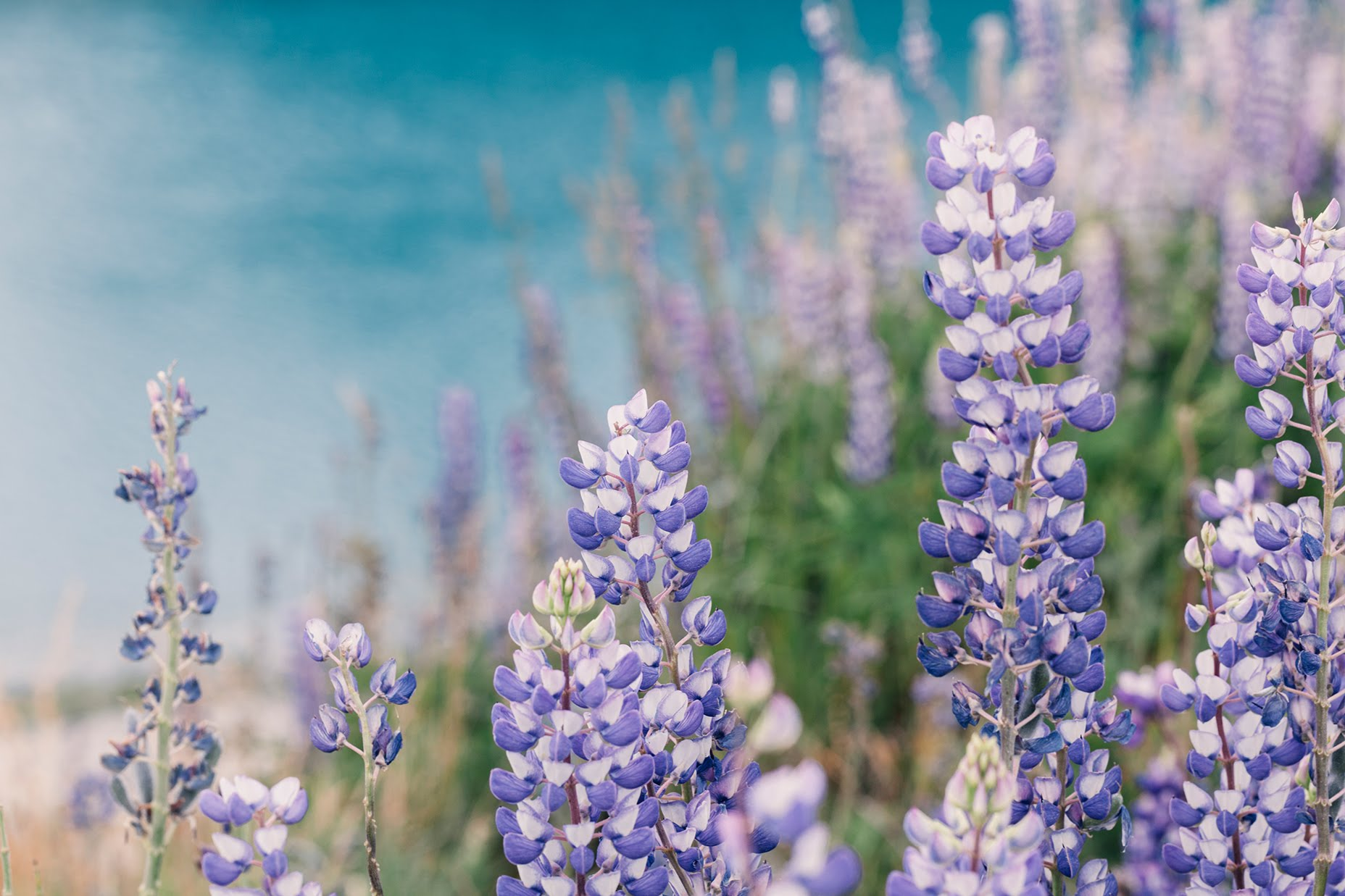 free-desktop-wallpapers-plant-collection-2 Nathalie Priem Photography