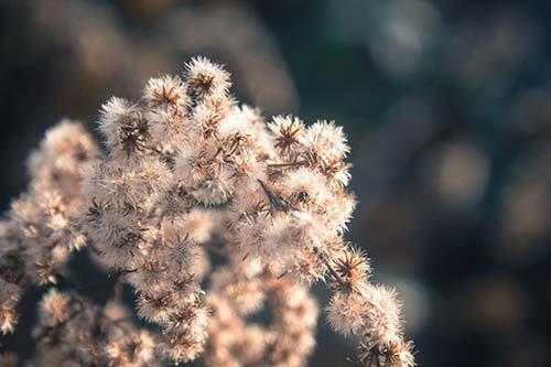 Dry plant in the winter free stock photo.