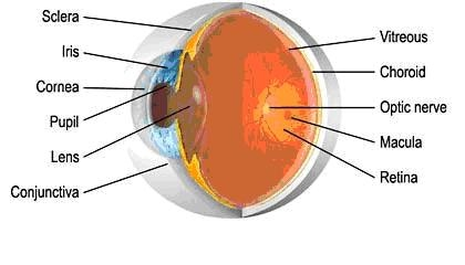 Structure of eye npandeyvr click here for an interactive eye anatomy animation ccuart Images