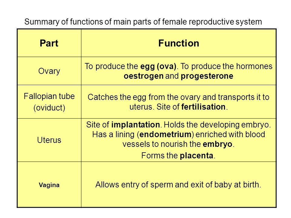 summary of fuctions of main parts of Female Reproductive System