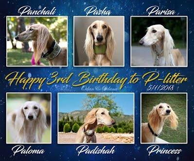 https://sites.google.com/site/odanoodanaplitter/photo-story-about-p-litter/happy3rdbirthday