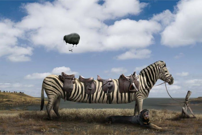 digital photography of a long extended zebra with 4 saddles and floating elephant by chris bennett
