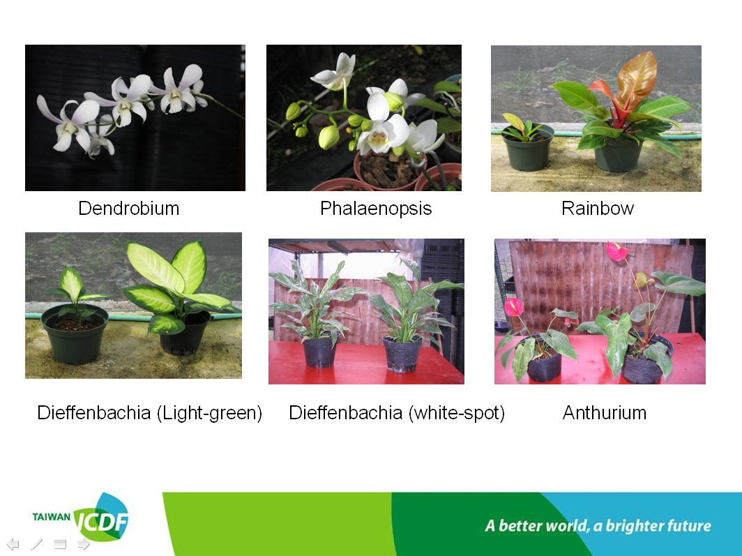 Ppt what is tissue culture? Powerpoint presentation id:6415379.