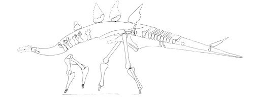 reconstruction of lexovisaurus durobrivensis based on bmnhr 3167 from galton 1985 the bmnhr 3167 specimen is now the type of loricatosaurus priscus