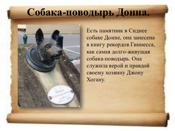 Памятники животным в австралии памятники город киров vk
