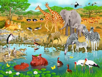 Image result for living things and their habitats images