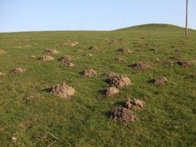 hills from moles on a hill