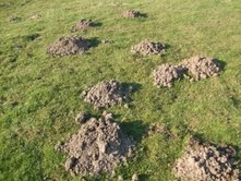 moles in the north west