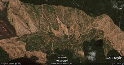 Palm oil views peter engbers brunei nature travel site see this recent example of ongoing logging for large palm oil developments in the limbang area google maps 2009 gumiabroncs Choice Image