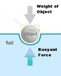 Archimedes Principle and Buoyancy - Physics of Diving