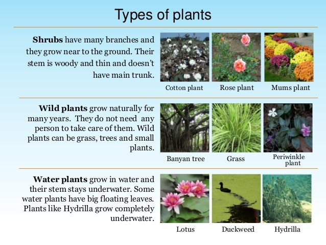 Types Of Plants All About