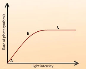 what effect does light have on photosynthesis