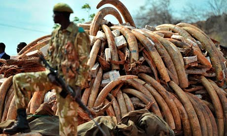 Which countries in Africa have the most problems with poachers?
