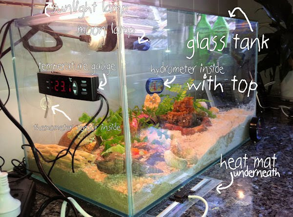 Do Hermit Crabs Need A Heat Lamp