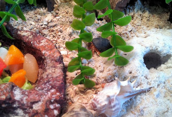 Setting Up A Crabitat Project Hermies