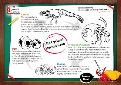 Crab Life Cycle Flashcards | Primary Learning |Crab Life Cycle Diagram