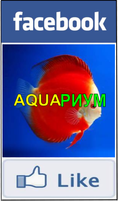 https://www.facebook.com/aquariumRalfa/