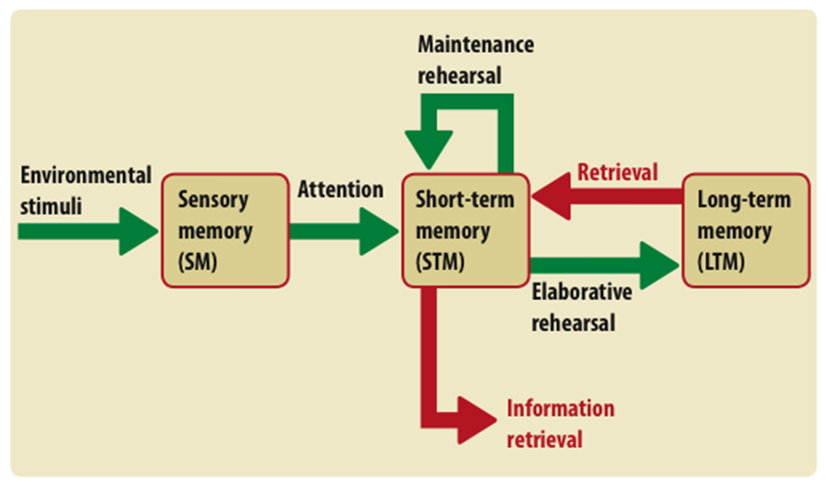 the multi store model in memory psychology Psychology definition of multistore model of memory: is one of the many theories which attempt to explain memory, the mmm says there are three stores- sensory, short and long term memory.
