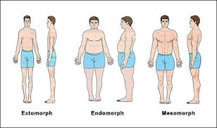 sheldons body types strengths and weaknesses
