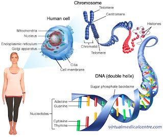 DNA and Protein Synthesis and Biotechnology - PW-COLETTA-BIO